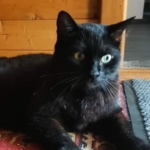 Пропал черный кот Тайсон